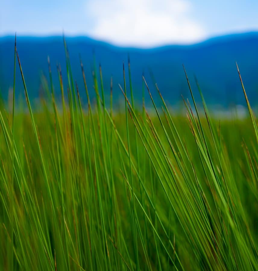 株式会社山万 い草畑